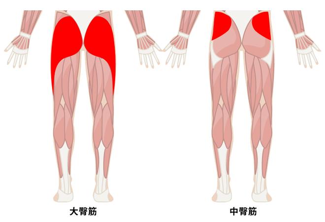 大臀筋と中臀筋