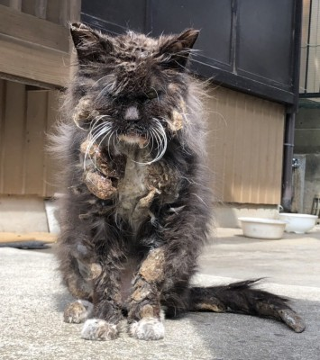 """ボランティアスタッフが目を疑った、地域猫""""にどみちゃん""""(写真:ねこけんブログより)"""