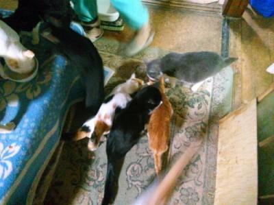 多頭飼育が崩壊した現場(写真:ねこけんブログより)