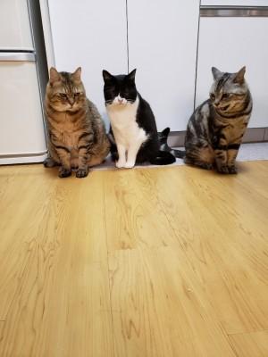 新たな家族と出会い、幸せに暮らすメンメ(写真:ねこけんブログより)