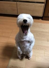 """迫りくる""""バイオハザード犬""""に驚愕の声、「怖い…でも笑える」"""