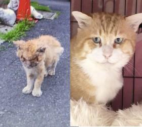 薬品かけられたボロボロの猫、半年で奇跡の復活「見惚れるほどのイケメンぶり」