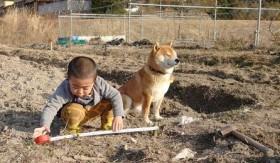 """畑仕事を頑張る男の子と""""我関せず""""な柴犬コンビの奮闘劇"""