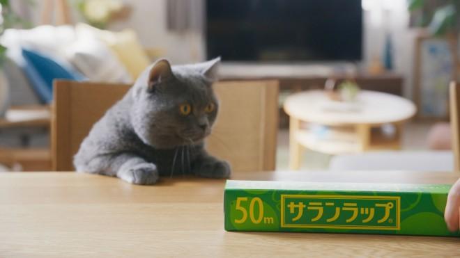 サランラップのCM『切りたい猫』篇