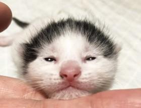 「間寛平に似てる!」ステキ模様の子猫が美少女に変貌、保護され生まれた猫にも幸せになる権利