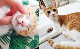 「子猫にはミラクルがある」長く生きられないと言われた保護猫、9等身モデル体型イケメンに仰天チェンジ