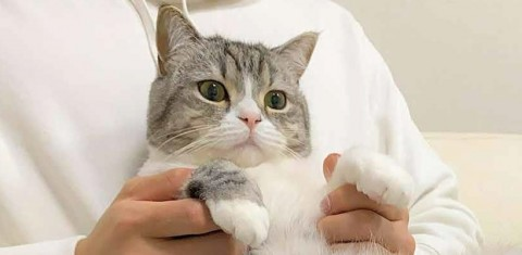 """6億回見られた猫『もちまる日記』なぜ人気? """"下僕さん""""が明かす裏側と""""もち様""""の正体「中身は犬」"""