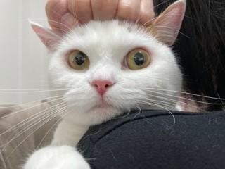 """""""猫見知り""""のマロン(写真:ねこけんブログより)"""
