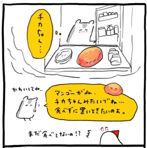孫からの贈りもの、マンゴーが食べられない…冷蔵庫を開けるたびに思いを馳せるおばあちゃん(画像提供:@cicasca)