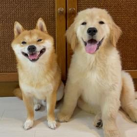 """漫画のように笑う2匹の""""満開笑顔""""にやられてしまう人続出"""