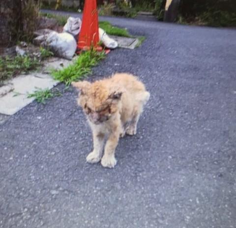 薬品をかけられるという虐待に遭ったボロボロの猫(写真:ねこけんブログより)