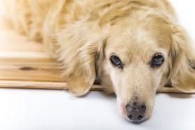 紀州のドン・ファン「遺産は愛犬に」 死後、財産をペットの飼育費として残すには?