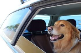 車内に犬6匹放置して全滅、人より熱中症になりやすいのに...「動物虐待」では?