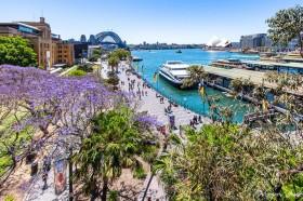 シドニーの春を告げる花!美しいジャカランダ・スポット3選