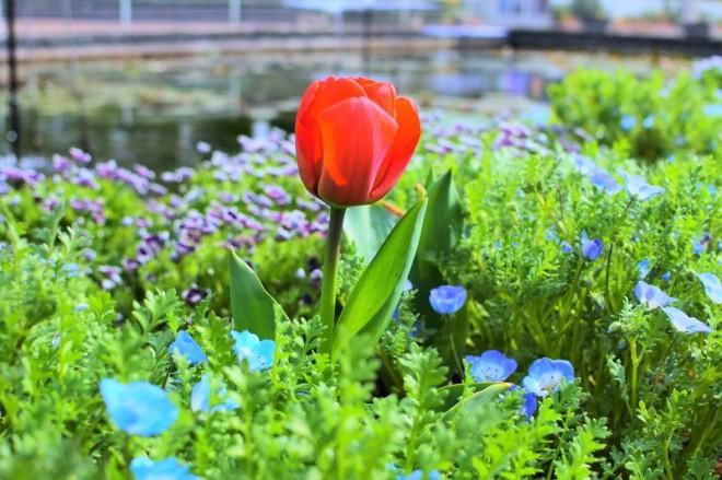 サムネイル 家族で訪れたい!季節の花々が堪能できる「大船フラワーセンター」