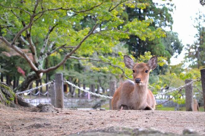 サムネイル 奈良公園周辺でおすすめ!食べておくべき「奈良グルメ」5選