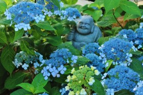 甘茶の寺・建仁寺霊源院「甘露庭」で初夏の庭園を味わおう