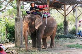 象に乗りタイ!プーケットでゾウ乗り体験を楽しもう