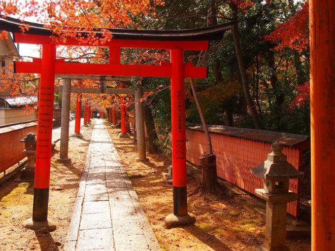 サムネイル 美しい紅葉と鳥居が続く!京都・吉田山「竹中稲荷社」