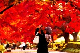 那須高原の晩秋を彩る「大山公園の紅葉トンネル」は見逃せない!