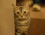 吉祥寺の猫カフェ「きゃりこ」にいるネコちゃん
