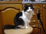 ルカ 癖は猫パンチ