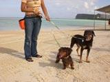 グアムの浜辺を愛犬と散歩も可能に