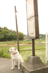 バス停で待つカイくん