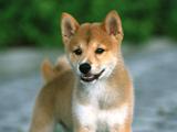 人気の犬の名前、1位は「モモ」