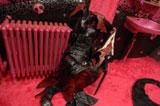 深田恭子演じるドロンジョが脱ぎ捨てた衣装(C)2008 タツノコプロ/ ヤッターマン製作委員会