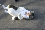 猫の着ぐるみで走ったり飛んだり転んだりとハードな演技をこなした。