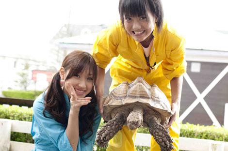 松原(左)&宮澤(右)チームは亀との握手を試みる(C)東北新社