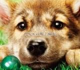 12月16日発売「ウルルの唄」