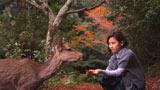 厳島神社のある宮島で紅葉のもみじを手に取るシーンでは、撮影中に突然、野生の鹿がフレームインした偶然の珍事が発生。内田のとっさのアドリブがそのまま本編に採用された(C)2010 科学技術振興機構(JST) 日本科学未来館・TBSビジョン