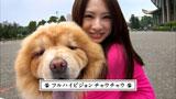 可愛いチャウチャウと北川景子の2ショットも・・/『サイバーショット DSC-WX5』(ソニー)CM
