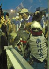 サンシャイン国際水族館が改装前最終営業日を迎え、来場者にペンギンたちが「ありがとう」とお見送り【8月31日=東京・池袋】 (C)ORICON DD inc.