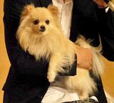 連続ドラマ『犬を飼うということ〜スカイと我が家の180日〜』の制作発表会見に参加したスカイツリー役の役者犬・ダイヤ