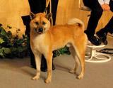 被災地で保護された迷い犬・アーツ