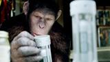 2011年10月公開予定『猿の惑星:創世記(ジェネシス)』 (C)2011 TWENTIETH CENTURY FOX
