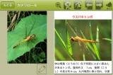 『図鑑カメラ』(iPhone/GAKKEN CO.,LTD/税込450円)