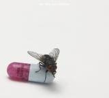 ニューアルバム「I'M WITH YOU」(8月31日発売)ジャケット写真