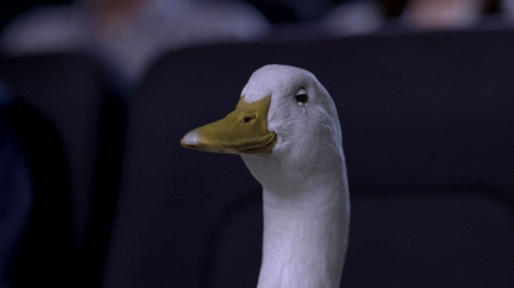 映画『神様のカルテ』に感涙するアフラックダック