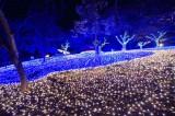 さがみ湖リゾート プレシャーフォレスト(神奈川県相模原市)の「さがみ湖イルミリオン」では約300万個のLED電球を採用