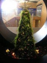 """苔のクリスマスツリーに「レッドビーシュリンプ」がオーナメントのようにからみつく新江ノ島水族館(神奈川県藤沢市)のクリス""""モス""""ツリー"""