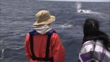 NHK・BSプレミアム『謎の巨大生物を追う 〜仲間由紀恵・小笠原の海をゆく〜』より マッコウクジラを追跡する旅人・仲間由紀恵(C)NHK