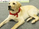 『ポチたまペットの旅』の3代目旅犬を務めるまさはる君 (C)ORICON DD inc.