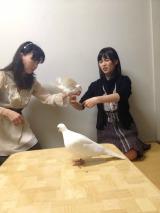 ハトを指に乗せる生田絵梨花