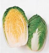ハクサイも冬おなじみの野菜(写真はタキイ種苗の「オレンジクイン」)