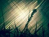 写真作品集『ほんわり2012』