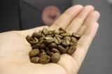 """世界最高級のコーヒー""""ブラックアイボリー""""を副原料に使用"""